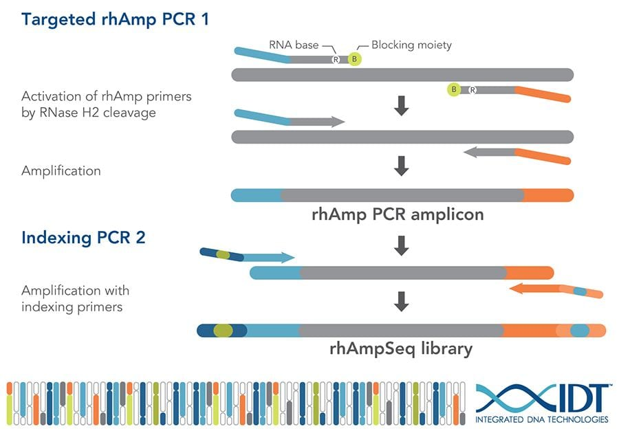 Complicated workflow schematic for rhAmpSeq process: activation of primers, amplification, and indexing.