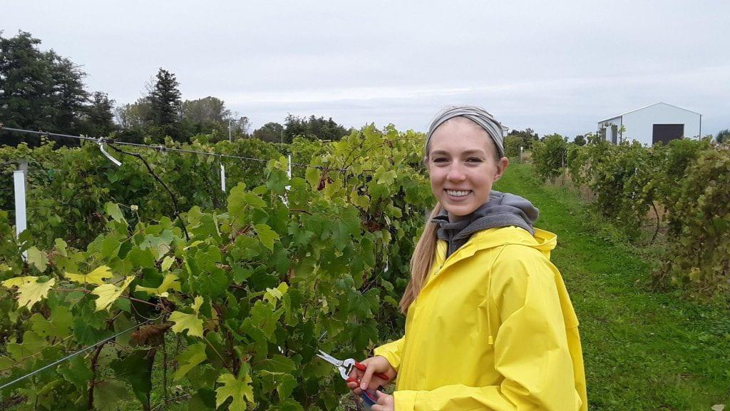 Anna Underhill, working in vineyard