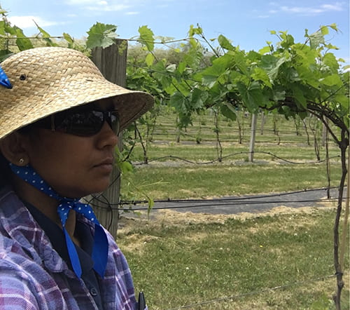 Dilmini Alahakoon standing in a vineyard