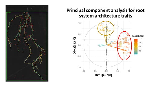 2 dimensional scan of root architecture compared to principal component analysis for root system architecture traits