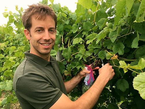 Noam Reshef in vineyard collecting fruit samples