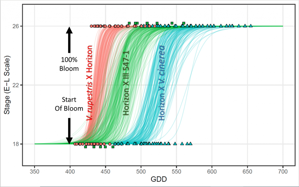 Graph showing progression of bloom in V. rupestrisxHorizon, Horizonx Ill. 547, and Horizon x V. cinerea