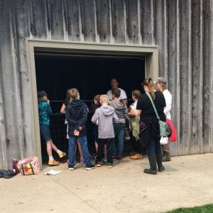 Children learn about beef cattle