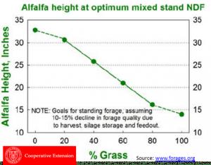 Alfalfa height at optimum mixed stand NDF