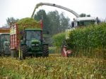 Harvesting Corn Silage.