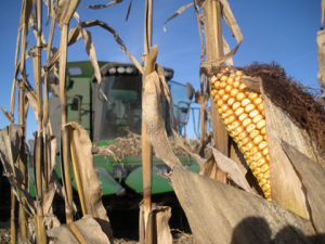 Grain corn in NY from 2009-2013 had an average annual value of $440M, greater than the entire annual value of all fresh market vegetables or the total fruit crop in NY during this same period.