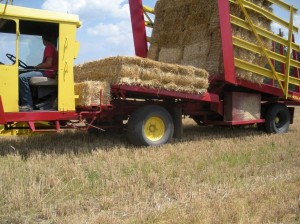 Wheat straw adds significant profit to wheat growers in NY.