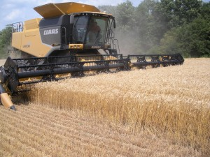 The value of wheat exceeded $50M In NY in 2013, in part because of a record 68 bushel/acre State average yield.