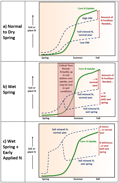 Figure 1. Early-season N dynamics in corn systems. a) N in organic matter (OM) begins mineralizing before corn is ready to take it up, and contributes significant amounts of nitrogen for crop uptake in normal to dry years. b) In a wet spring, early-mineralized N is easily lost during this critical time period, leading to later-season N shortages if not accounted for with additional sidedressed N. c) Applying N fertilizer or manure early increases the risk of large losses.