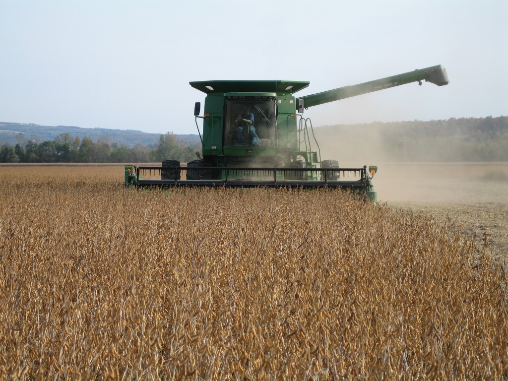 soybean harvest-Henry 014