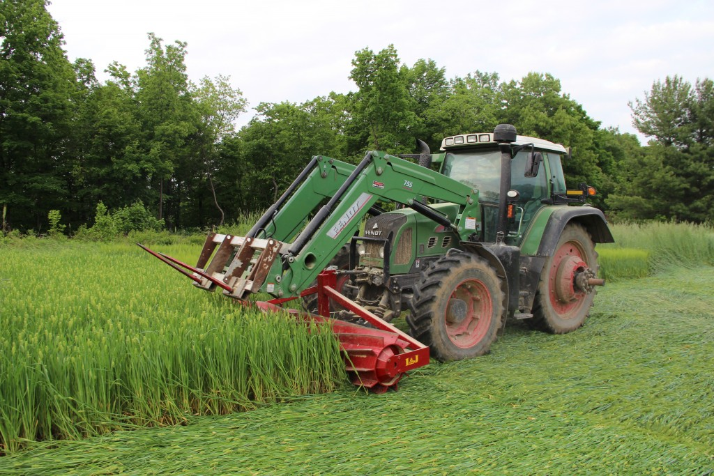 Figure 1. Front-mounted roller-crimper unit flattening a barley cover crop at the on-farm site. The blunt meal blades on the cylinder crimp, rather than cut, the cover crops. Filled with water, the roller-crimper weighs approximately 2600 lb.