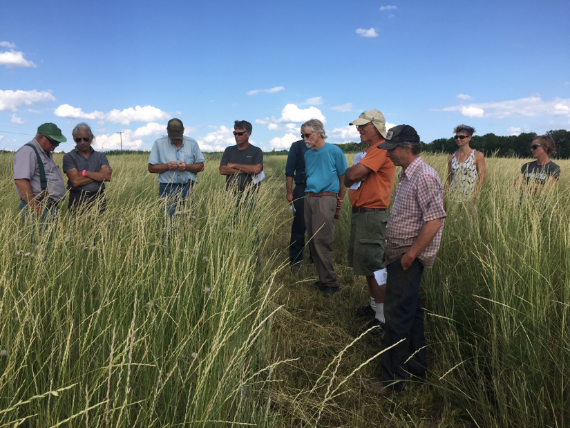 Figure 3. Farmer advisors and Cornell University researchers evaluate a plot of Kernza at the Musgrave Research Farm, July 19, 2016.