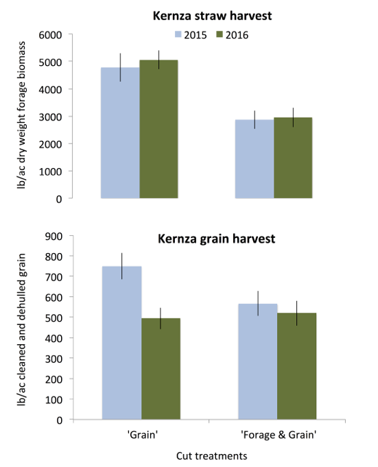 Figure 5. Kernza straw (above) and grain (below) yield for treatments 'Grain' and 'Forage & Grain' in 2015 and 2016. Error bars indicate standard error within each treatment within a year. Harvest occurred on September 11, 2015 and August 23, 2016. Kernza grain yields are based on a subsample of hulled grain that was hand threshed and a conversion factor was then used to estimate yield expressed as cleaned and de-hulled grain.