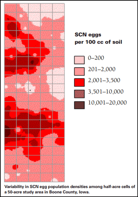 Variability of SCN within field
