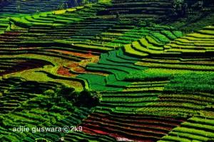 agriculture_by_adjieguswara_art