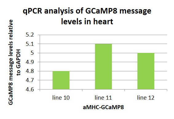 qPCR analysis of GCAMP8 message in the heart.
