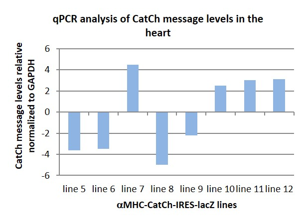 qPCR of CatCh message in the heart.