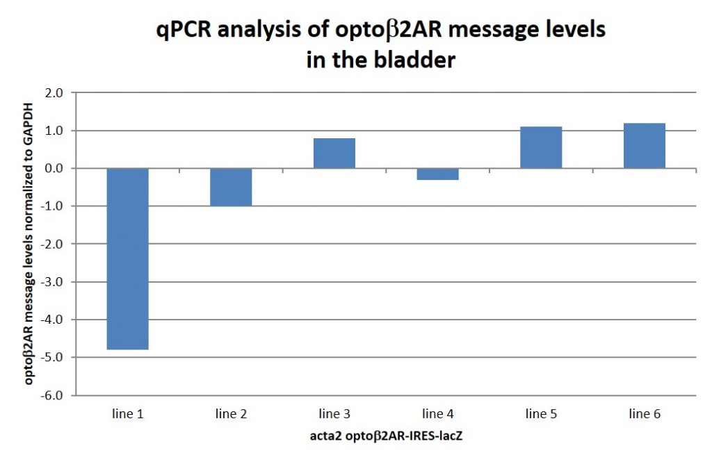 qPCR analysis of optob2AR message in the bladder