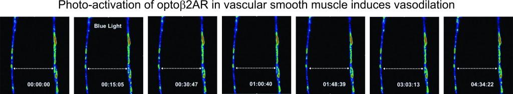 b7-photo-activation-vasodilation-timelapse