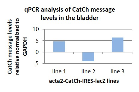 qPCR analysis of CatCh message in the bladder