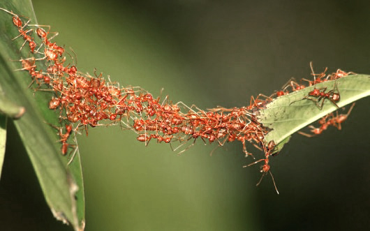 ant-bridge_2302146k-530x331