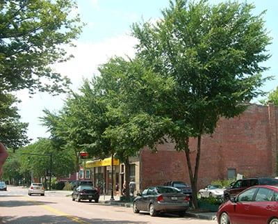 State street elms in CU-Soil