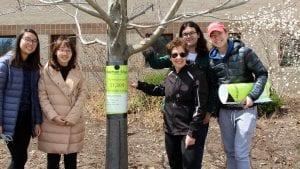 Nina Bassuk and students tag a tree outside Roberts Hall.