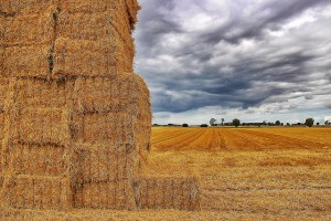 stacks of hay in a field on a stormy day
