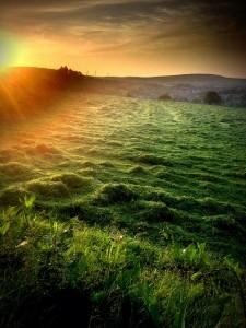 Orange sun shining down on a field