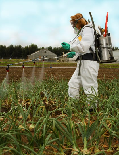 women spraying pesticides on crop at a farm