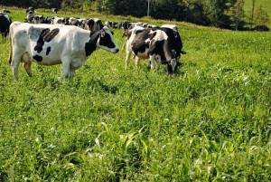 Students can take on-line courses through the Dairy Grazing Apprentice Program.