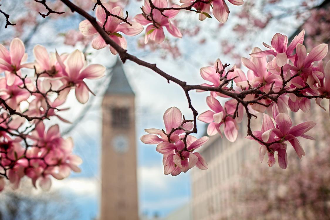 Cornell spring 1