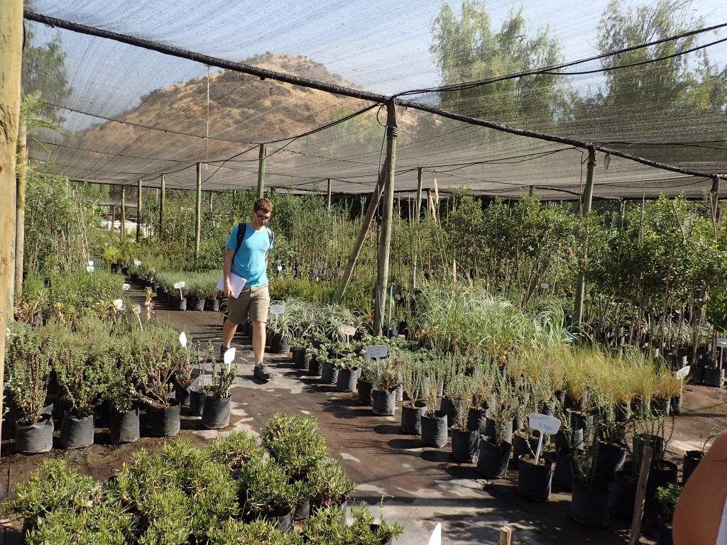 Pumahuida Native Plant Nursery