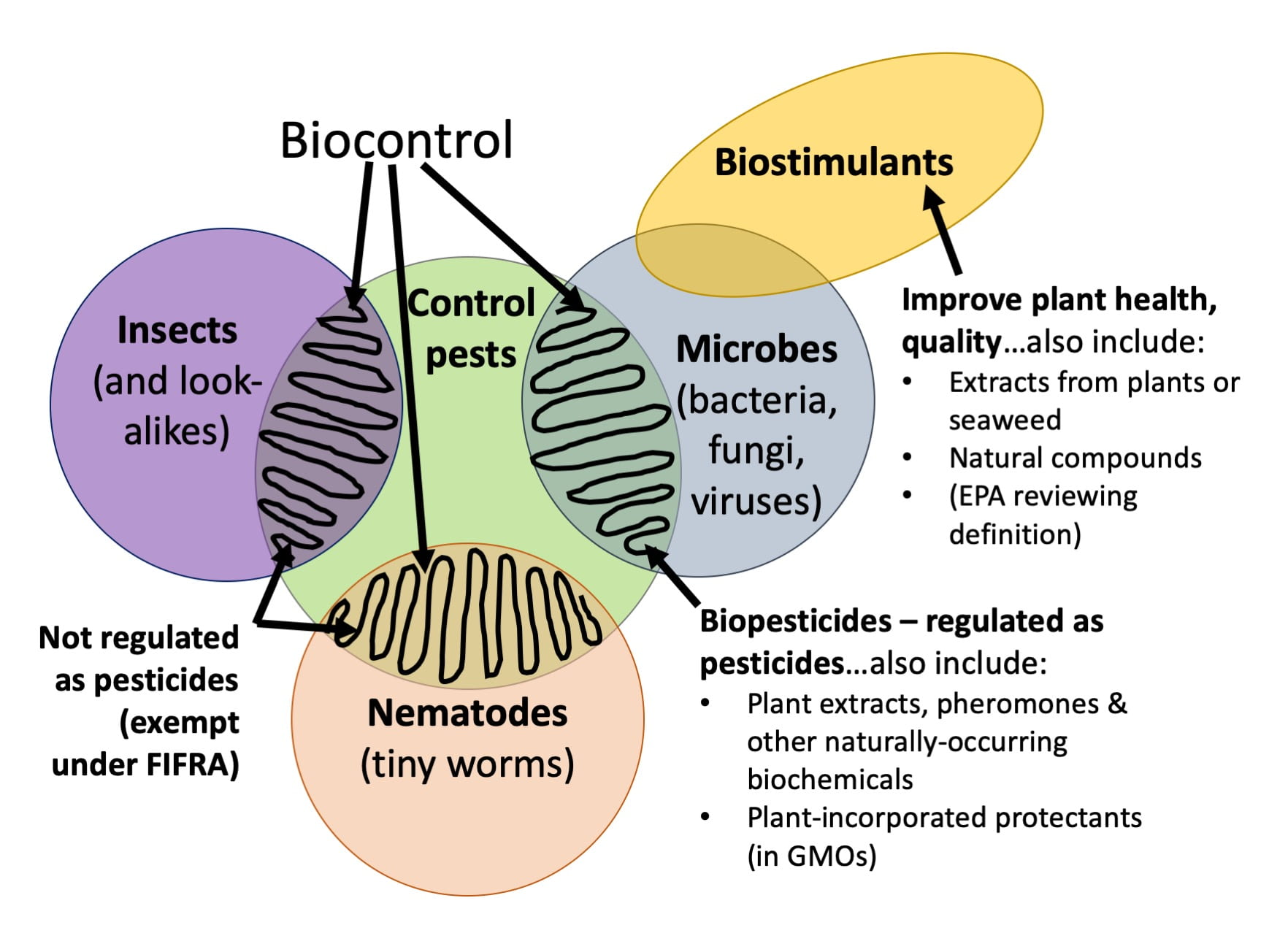 "Venn diagram showing the relationships among biocontrol, biopesticides, and biostimulants. Biocontrol is when an organism controls pests. Often that organism is an insect (and similar, like spiders or predatory mites), a nematode (tiny worm), or a microorganism or microbe (bacteria, fungi, and viruses). Insects and nematodes that control pests are biocontrol, but are not regulated as pesticides. Microbes that control pests are regulated as pesticides. Along with plant extracts, pheromones, naturally-occurring biochemicals, and plant-incorporated protectants (found in GMOs) they are biopesticides. Biostimulants may be microbes, extracts from plants or seaweed, or natural compounds. But their purpose is to improve plant health and/or quality; not to control pests. The EPA is currently reviewing the definition of the term ""biostimulant"" and there may be more regulation on these products in the future."