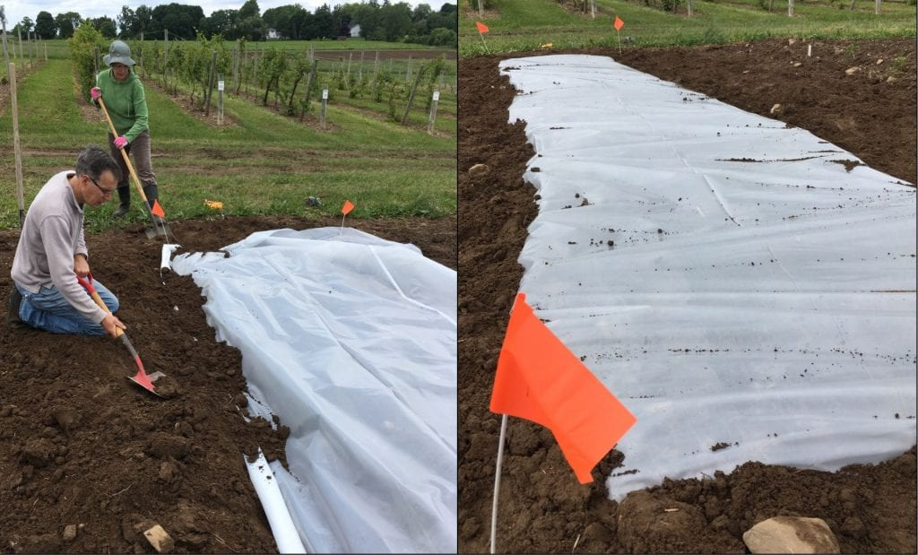 Two people shovelling soil on top of clear plastic laid on the ground on the left, and on the right, clear plastic cover a small area of soil, with all the edges of the plastic buried