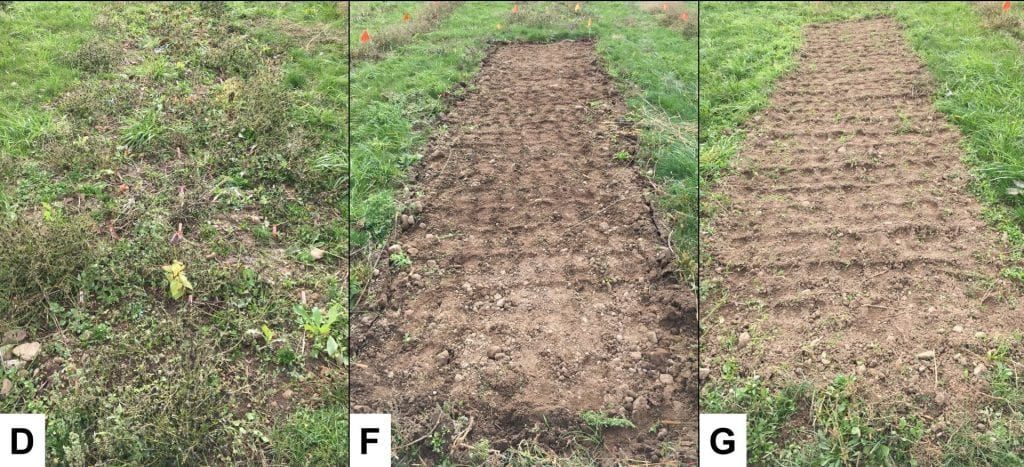 Mixture of mowed weeds with small plants (left), plot of bare ground (middle and right)