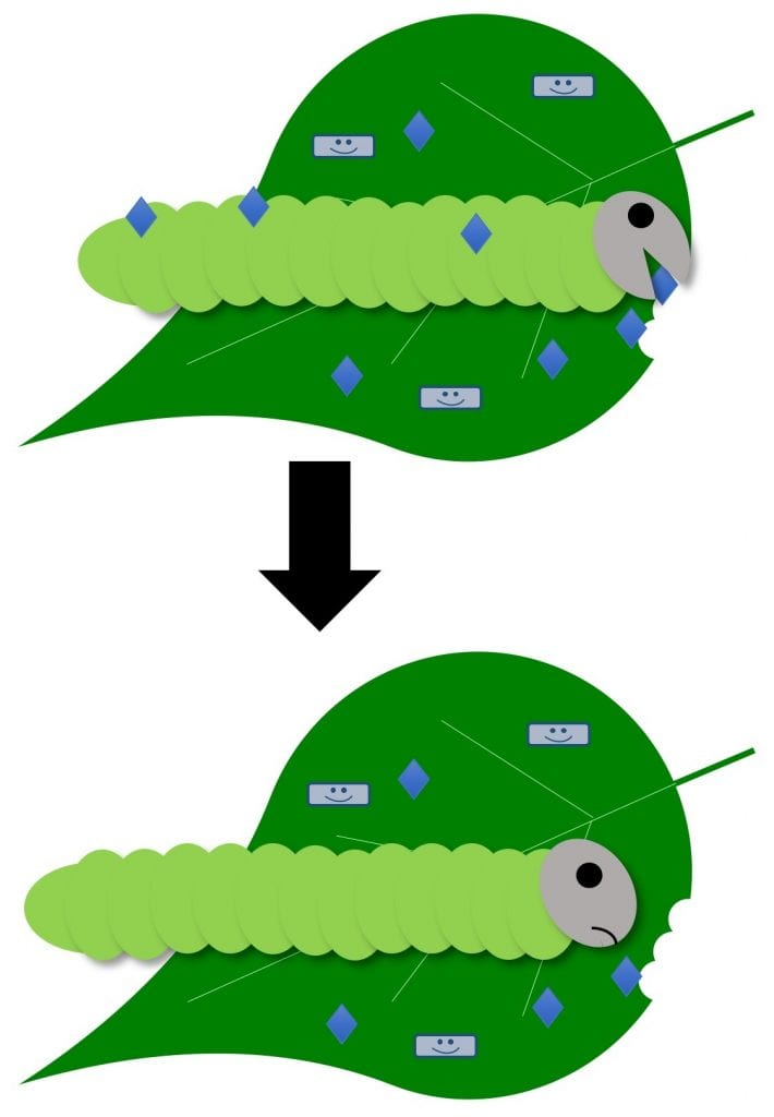 A caterpillar eats or comes in contact with a bioinsecticide that causes the caterpillar to stop feeding.