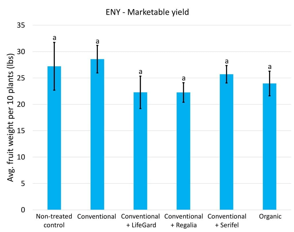 We didn't measure statistically significant differences in marketable yield among any of the treatments at any of the sites. Data for eastern NY are shown in this graph.