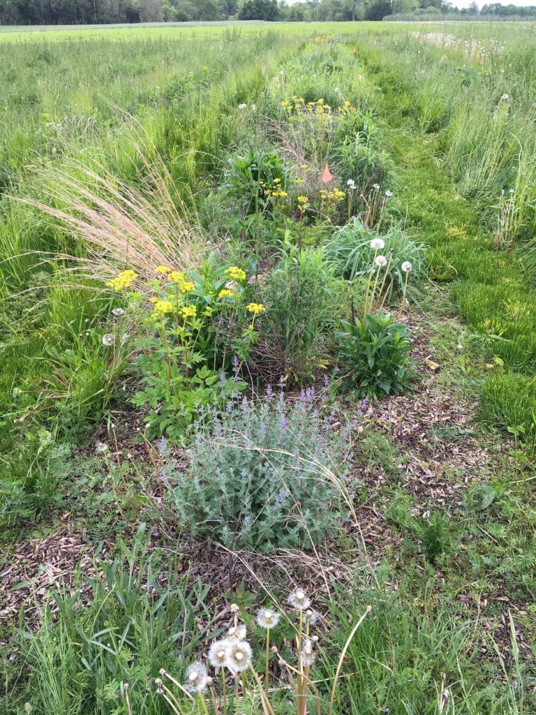 A plot containing wildflowers (some yellow and purple ones in bloom), with woodchip mulch visible between plants.