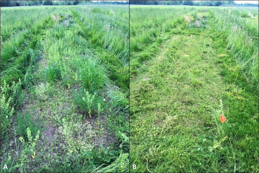 The same plot is shown in two pictures. The picture on the left has some bare ground visible and many patches of grass and broadleaf weeds. The picture on the right shows the plot after it was mowed.
