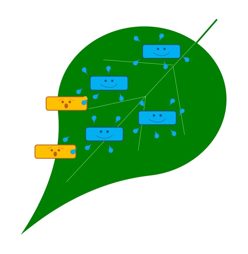 Green leaf with blue rectangles with smiling faces representing microbes as natural enemies of the pest microbes (yellow rectangles with shocked faces). The blue microbes are producing blue droplets (representing antimicrobial compounds).