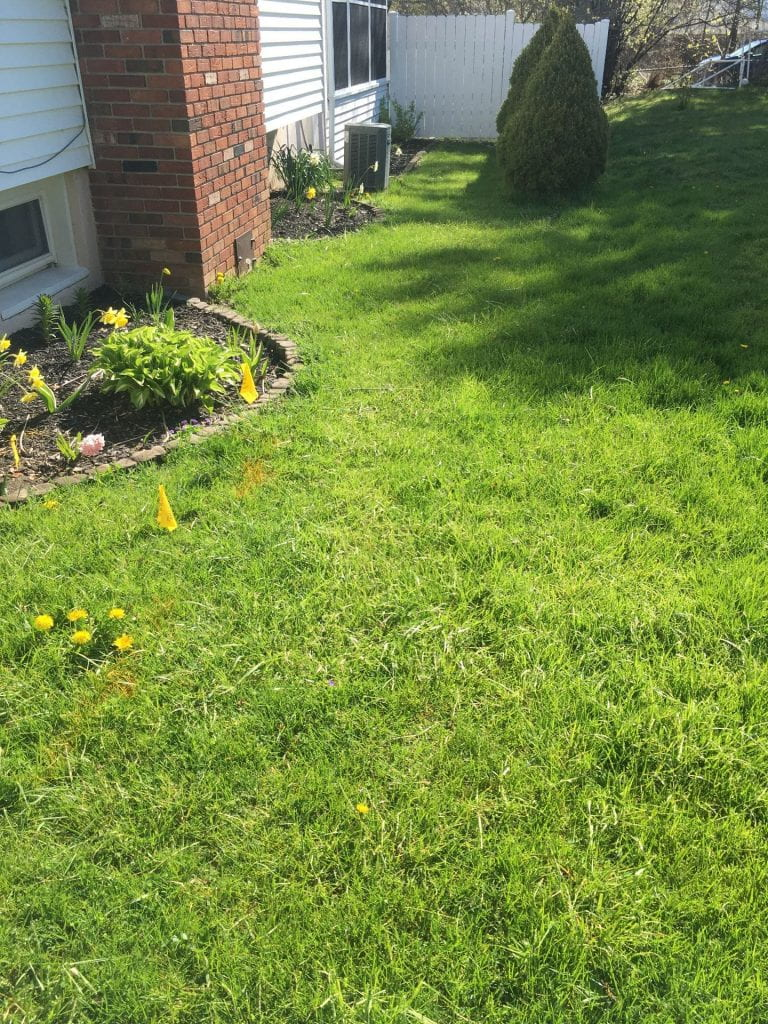 Lawn along the side of a house that is mostly sunny