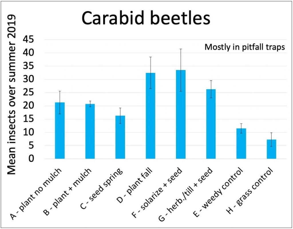 A bar graph showing numbers of carabid beetles caught in each treatment (mostly in pitfall traps). The most carabid beetles were caught in treatments D (fall transplant after buckwheat), F (fall seed after solarizing soil), and G (fall seeding after using tillage and herbicide to control weeds). The fewest carabid beetles were caught in the control plots (E and H).