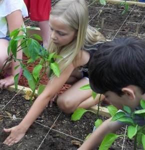 Students in Arkansas work in their new school garden.