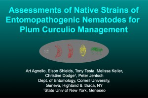 Assessments of Native Strains of Entomopathogenic Nematodes for Plum Curculio Management