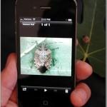 BMSB IPhone