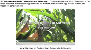 Western Bean Cutworm: Early Scouting Video (Purdue Cooperative Extension Service)