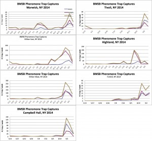 Sept. 15: Monitoring of 7 Hudson Valley Orchards for BMSB Using Pheromone Baited Tedders Trap Graphs