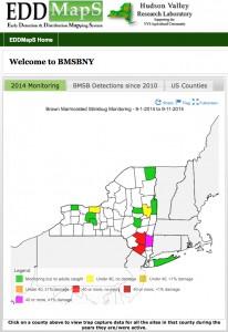 NYS BMSB Monitoring 9.11.14