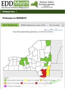 EDDMaps:BMSB:NY